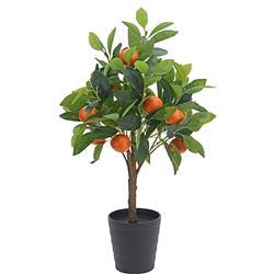 Drzewko pomarańczy w donicy 70 cm