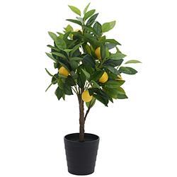 Drzewko cytrusowe w donicy 70 cm