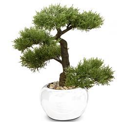 Drzewko bonsai w doniczce iglaste
