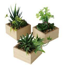 Komplet 3 roślin doniczkowych Mirela