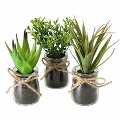 Komplet 3 roślin doniczkowych Eloise