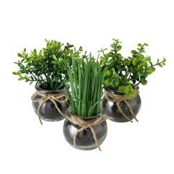 Komplet 3 roślin doniczkowych Freya