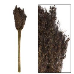 Ozdobna trawa trzcinowa czarna 75 cm