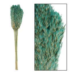 Ozdobna trawa trzcinowa turkusowa 75 cm