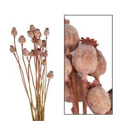 Suszone kwiaty Makówki różowe 60 cm