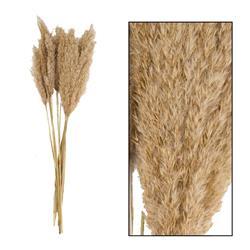 Trawa pampasowa naturalna 75 cm
