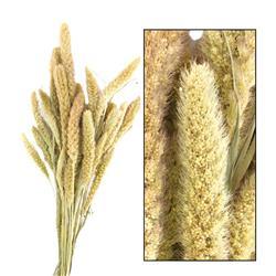 Bukiet suszonych traw ozdobnych 52 cm