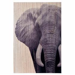 Obraz ścienny z motywem słonia