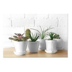 Nadruk na płótnie Cactus 60x40 cm wzór 2
