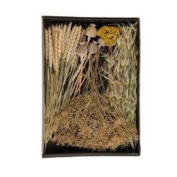 Susz dekoracyjny florystyczny naturalny