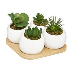 Komplet 4 roślin doniczkowych Zoey White