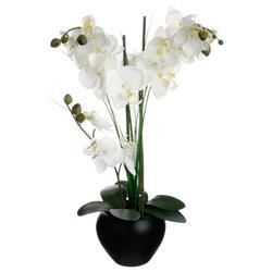 Orchidea w czarnej doniczce 53 cm