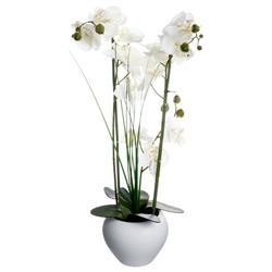 Orchidea w białej doniczce 53 cm