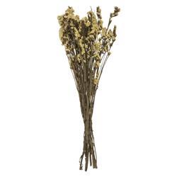 Bukiet suszonych kwiatów Myosotis żółte