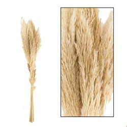 Trawa pampasowa Jaxx kremowa 75 cm 6 szt