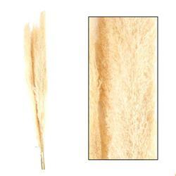 Trawa pampasowa Jaxx kremowa 160 cm