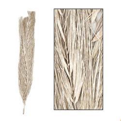 Suszona egzotyczna trawa bielona 100 cm