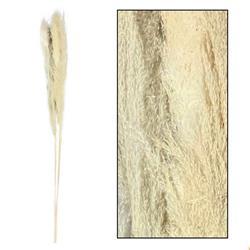 Trawa pampasowa ecru 150 cm 3 szt
