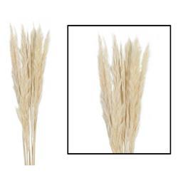 Trawa pampasowa Mace naturalna 75 cm