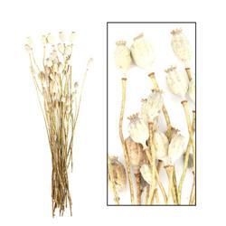 Suszone kwiaty Makówki naturalne 60 cm