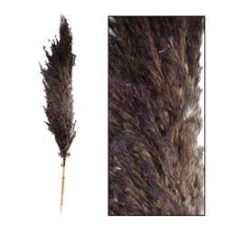 Trawa pampasowa Jaxx czarna 75 cm 6 szt