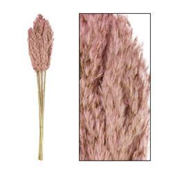 Ozdobna trawa trzcinowa różowa 75 cm