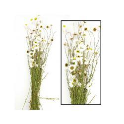 Bukiet suszonych kwiatów Acroclinium