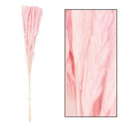 Trawa pampasowa Mace różowa 75 cm 10 szt