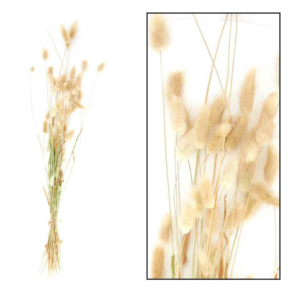 Susz dekoracyjny lagurus naturalny 75 cm