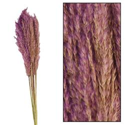 Trawa pampasowa Kyan liliowa 75 cm