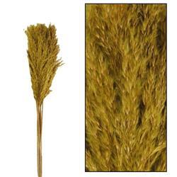 Trawa pampasowa Kyan oliwkowa 75 cm