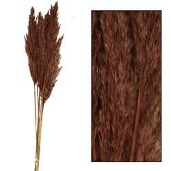 Trawa pampasowa Kyan brązowa 75 cm